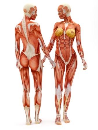 ciało miesnie
